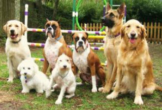 Dog Socialization Classes Houston TX