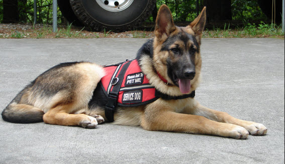 Service Dog Training Houston TX