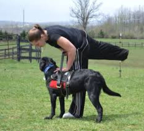 Houston Service Dog Training