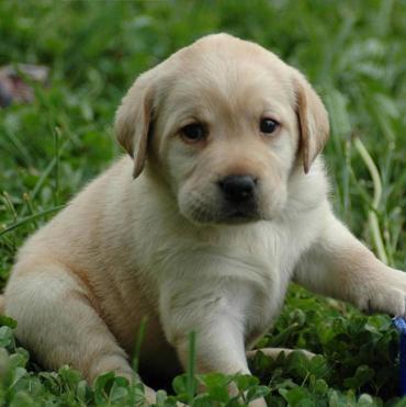 Dog Training Services Houston Dog Trainers Dog