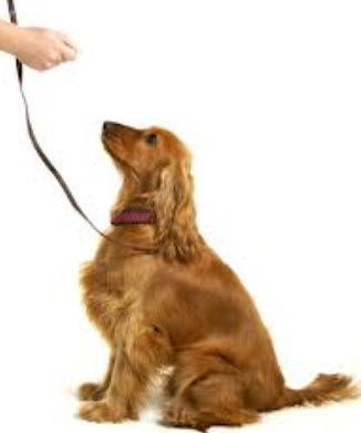 Dog Obedience Training Classes Houston Tx